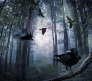Crows in the forest. Black crows flying in the forest in the night Royalty Free Stock Photos