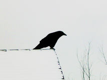 Crows Landing. A crow perched on a rooftop before a blizard Royalty Free Stock Photos
