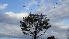 Crows leaving a tree stock video