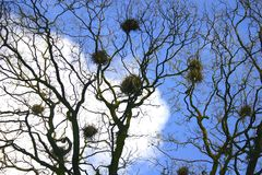 Crows nests Royalty Free Stock Photos