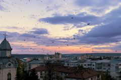Crows over the Bârlad`s downtown. Some crows which are predicting the change of weather in Bârlad. A high view over the rooftops Royalty Free Stock Images