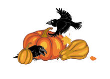 Crows and pumpkins Stock Photos