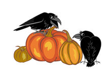 Crows and pumpkins Royalty Free Stock Image