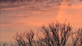 crows, raven, black birds, sunset, background red clouds