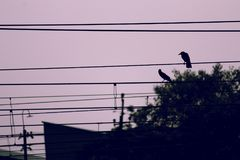 Crows resting on train power lines Royalty Free Stock Photos