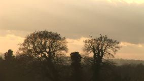 Traditional England countryside in winter with crows in trees stock video