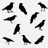 Crows. Set of silhouettes of crows Vector Illustration