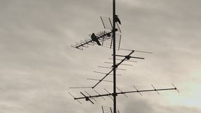 Crows Sitting On TV Antenna. Time Lapse Of Crows Sitting On A TV Antenna With Dramatic Cloud Background