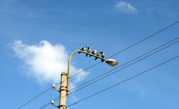 Crows talking to each other. Birds sitting on a streetlamp Stock Image