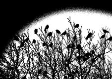 Crows on a tree Royalty Free Stock Photo
