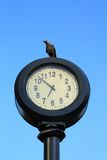Crows watching time Royalty Free Stock Photography