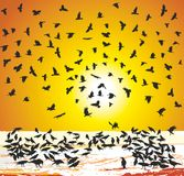 Crows in winter at sunset Stock Photos