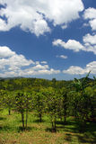 Croydon Plantation, Jamaica Royalty Free Stock Image