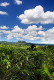 Croydon Plantation is a working plantation nestled in the foothills of the Catadupa mountains near Montego Bay, Jamaica Stock Photo