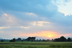 Crépuscule de gisement de riz d'horizontal Images libres de droits