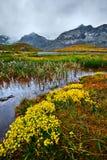 Córrego da água da montanha Imagens de Stock