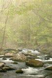 Córrego da mola na névoa Fotografia de Stock