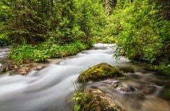 Córrego da montanha em Val di Fassa Imagem de Stock Royalty Free
