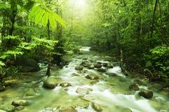 Córrego de Moutain Foto de Stock