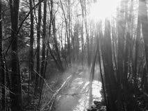Córrego do inverno Foto de Stock