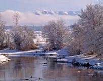Córrego e patos do inverno Imagens de Stock Royalty Free