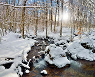 Córrego na madeira no inverno Imagem de Stock Royalty Free