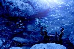 Córrego na madeira, tiro da noite Foto de Stock Royalty Free