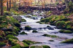 Córrego pitoresco na madeira Fotografia de Stock