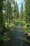 Córrego tranquilo Imagens de Stock Royalty Free