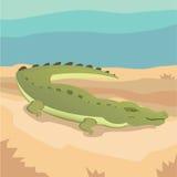 Crtoon隔绝了鳄鱼 免版税库存图片