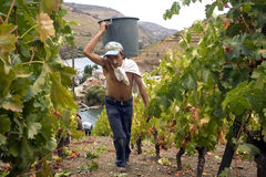 Cru de Douro Photos stock
