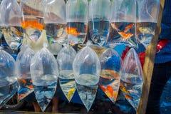 Cru des sachets en plastique, avec différentes espèces de poissons sur un marché à Denpasar, Bali en Indonésie Images libres de droits