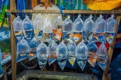 Cru des sachets en plastique, avec différentes espèces de poissons sur un marché à Denpasar, Bali en Indonésie Photos libres de droits