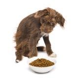 Cruce, 5 meses, sentándose detrás de un cuenco por completo de comida de perro imagen de archivo libre de regalías