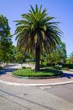 Cruce giratorio con la palmera, Sydney, Australia Foto de archivo libre de regalías