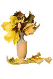 Cruche avec les feuilles tombées Photographie stock libre de droits