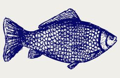 Crucian carp. Doodle style. Vector Royalty Free Stock Image