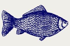 Crucian carp Royalty Free Stock Image