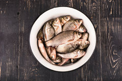 Crucian carp in a bowl Stock Images