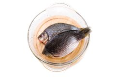 Crucian carp fish Royalty Free Stock Photography