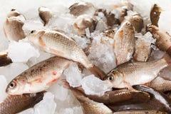 Crucian carp fish on ice as background Stock Photo
