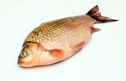 Crucian carp Royalty Free Stock Photos