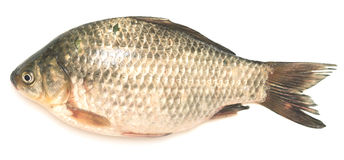 Crucian carp Stock Photo