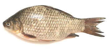 Crucian carp Stock Photos