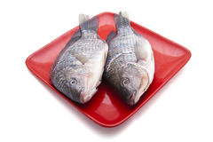 Crucian carp on plate Stock Photos
