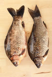 Crucian carp Royalty Free Stock Photography