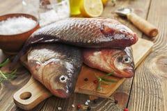 Crucian, fish Stock Image