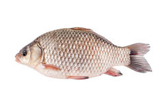 Crucian Stock Photography