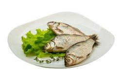 Crucian fish Stock Photography