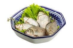 Crucian fish Stock Images